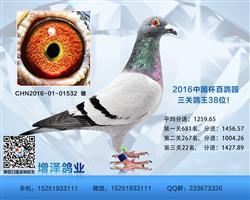 2016中国杯百鸽园三关鸽王38位!