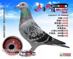 17齐鲁兆佳精英秋棚决赛123名