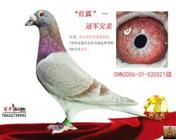 北京海淀神鸟杯冠军之父
