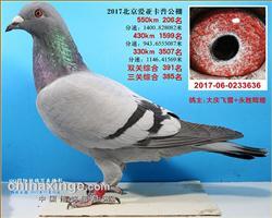 北京爱亚卡普 206名、