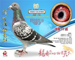锦州龙溪公棚三关鸽王总冠军