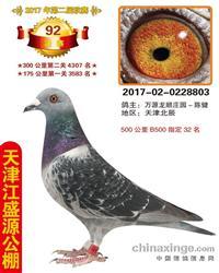 天津江盛源公棚决赛92名