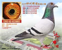 辽宁神州辉煌550挑战赛349名