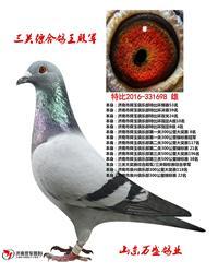 霍夫肯【三关综合四位】