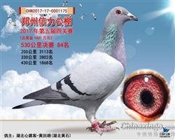 郑州信力公棚第五届四关赛决赛84名