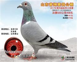 2017年山东誉翔公棚决赛458名