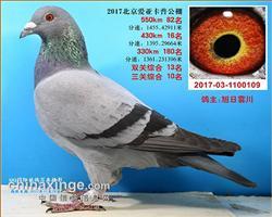 北京���卡普�Q�82名四�P�C合7名