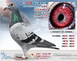 2017唐山长胜国际赛鸽公棚决赛6名