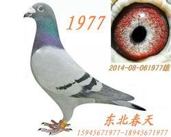 【春天】1977