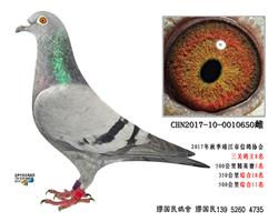 杨龚多拉斯650