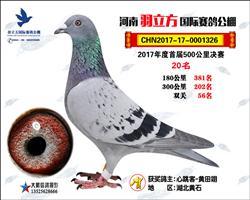 河南安阳羽立方国际赛鸽公棚决赛20名