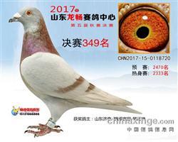 2017年赛绩鸽