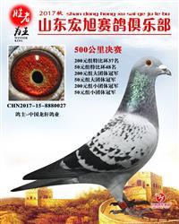 龙轩鸽业2017年春季特比环获奖鸽