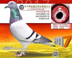 山东法兰德速霸龙国际赛鸽中心决赛219名