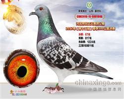 CHN2016-15-6001848