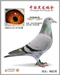 CHN2013-23-161704