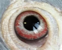 588眼睛