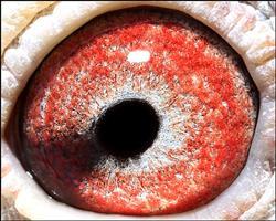 0000122眼睛