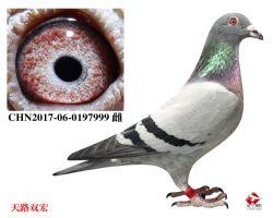 4_CHN2017-06-0197999 雌