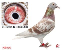 6_CHN2015-16-1889662 雌