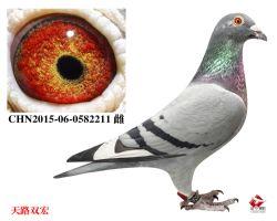 9_CHN2015-06-0582211 雌