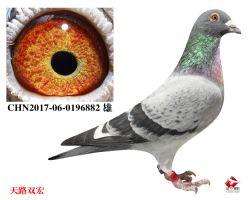 15_CHN2017-06-0196882 雄
