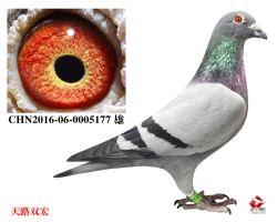 18_CHN2016-06-0005177 雄