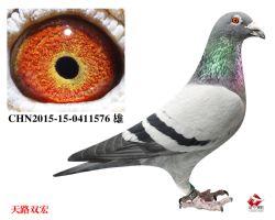 22_CHN2015-15-0411576 雄