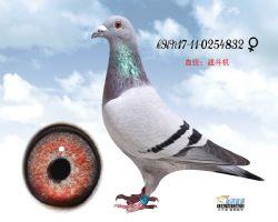 瑞麒832