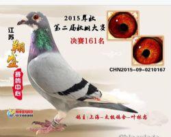 2015年秋江苏翔盛赛鸽公棚161名