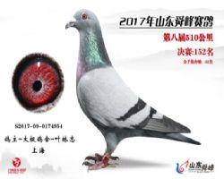 2017年秋山东舜峰赛鸽公棚决赛152名