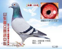2017年秋山东鑫众公棚决赛155名