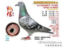 三关鸽王冠军