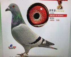 QQ图片20180129202956_副本