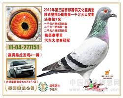 宏武赛鸽-李建军