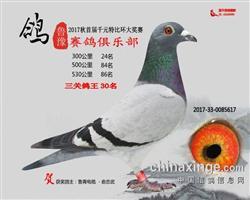 鲁豫三关鸽王30名