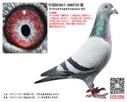 【神鹰300】×【超速时分】