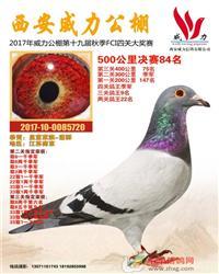 展厅种鸽拍卖