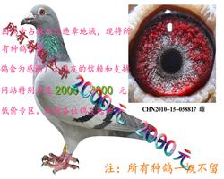 鸽舍拆迁 (2000元)