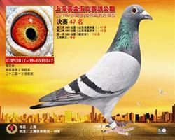 2017年上海黄金海岸鸽王季军