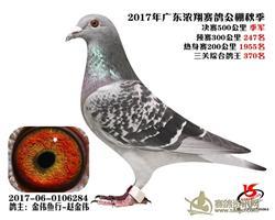 广东浓翔赛鸽公棚季军