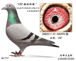 VIP种雄