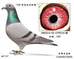 VIP种雌