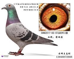 超级密码系种鸽
