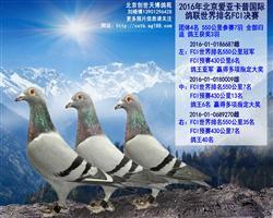 北京爱亚卡普团体4名