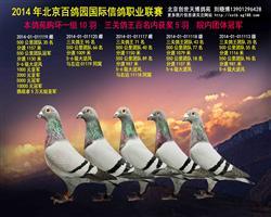 北京百鸽园院内团体冠