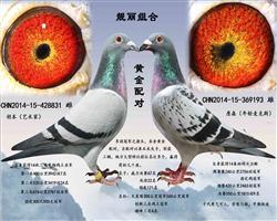 心之羽鸽苑