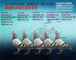 北京铁鹰四关鸽王团体亚军