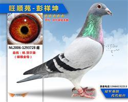 杨贺尔曼728