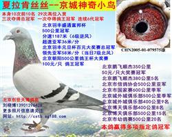 夏拉肯丝丝京城神奇小鸟